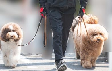 の散歩 工藤静香 犬